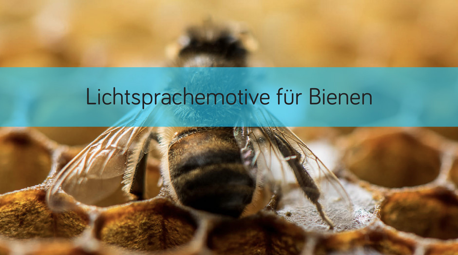 Lightwork Bienenprojekt