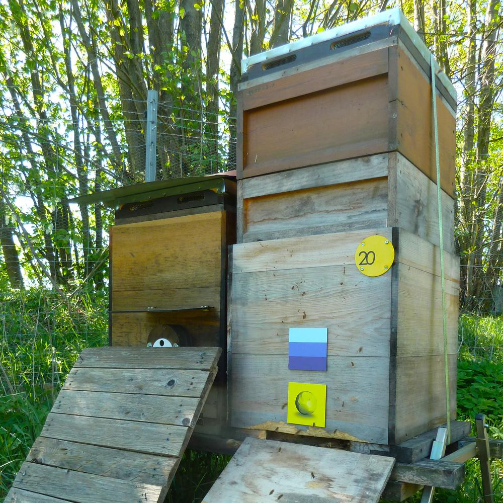 Lichtsprache-Objekte für Bienen von Lightwork