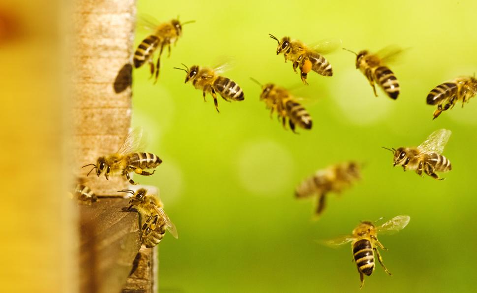 Honigliebling | Lichtsprache für Bienen